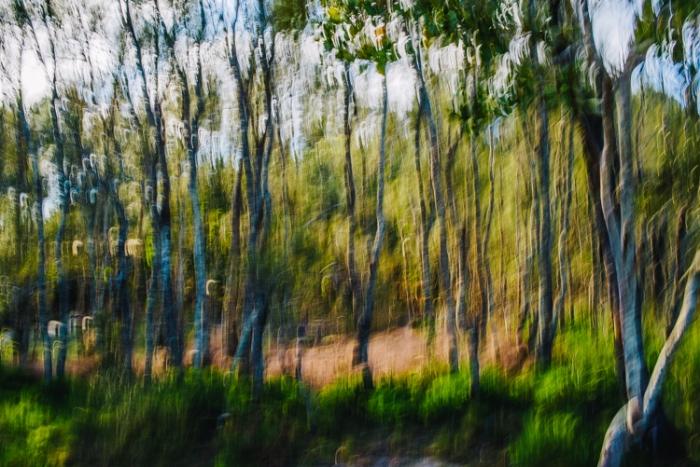 Brisbane Landscape Photographer